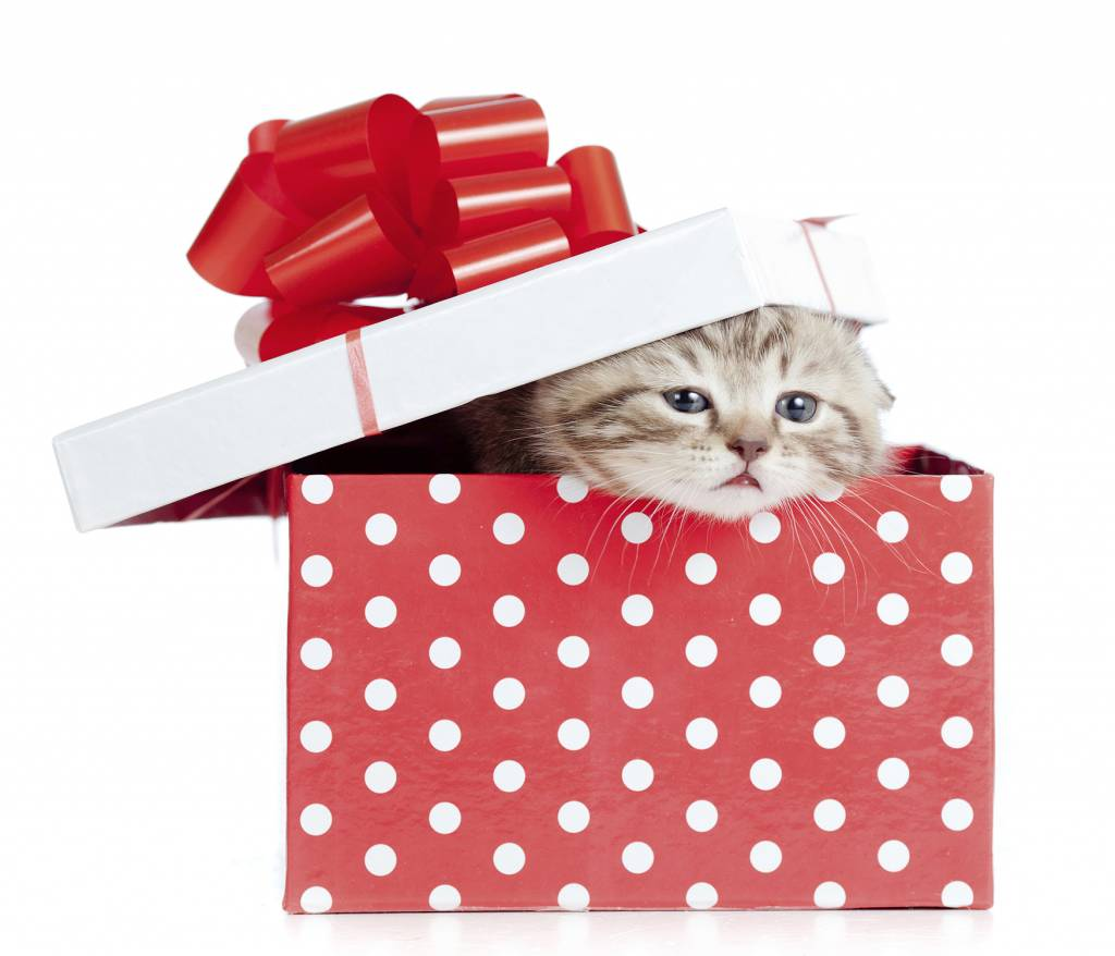 Kitten in red gift box