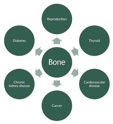 This diagram illustrates other fields of study where bone biomarkers are proving useful and demonstrates the changing roles of bone remodeling biomarkers.