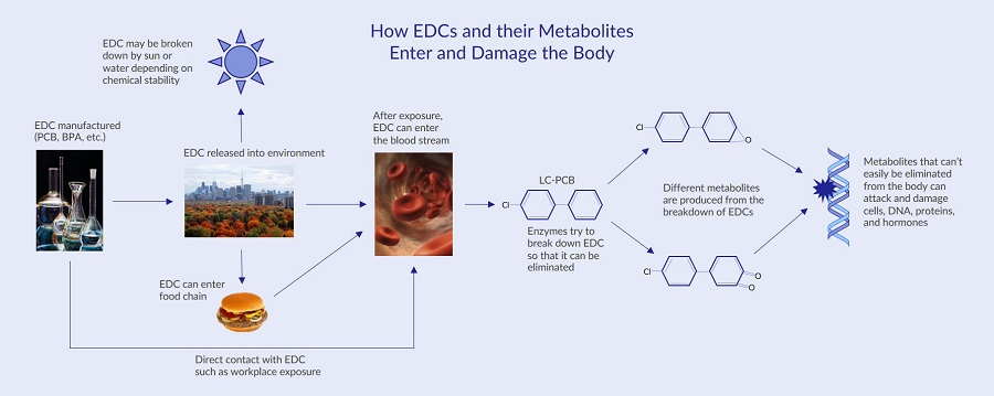 This process map outlines how endocrine disrupting chemicals can enter the body and generate harmful metabolites therefore demonstrating the need for regulating endocrine disrupting chemicals in consumer products.