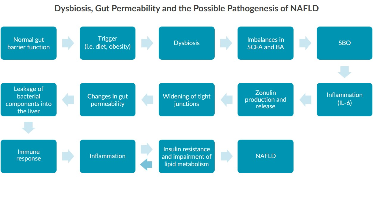 A process map illustrating the dysbiosis, gut permeability and pathogenesis of NAFLD.