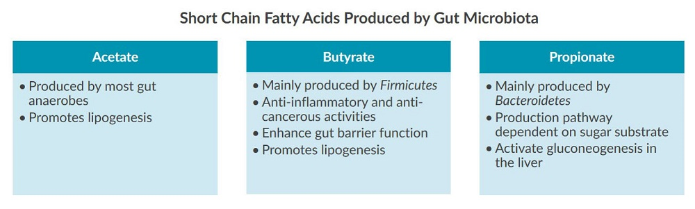 A table describing different short chain fatty acids produced by gut microbiota.