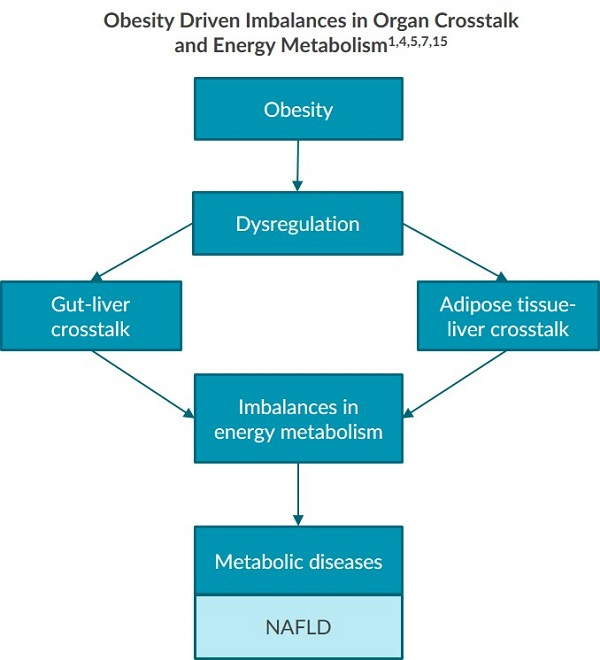 A diagram illustrating the obesity driven imbalances in organ crosstalk and energy metabolism.