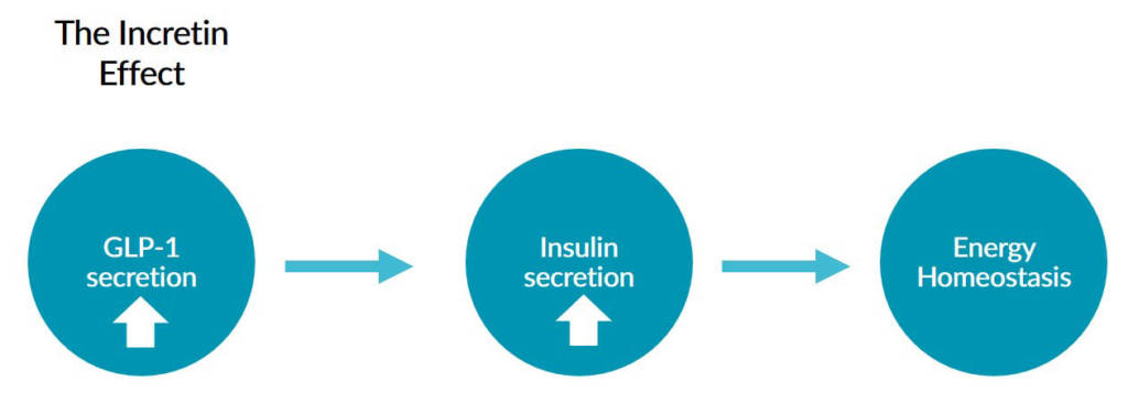 This chart depicts how the incretin effect helps maintain energy homeostasis.